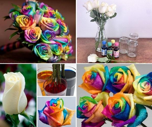 создание радужной розы