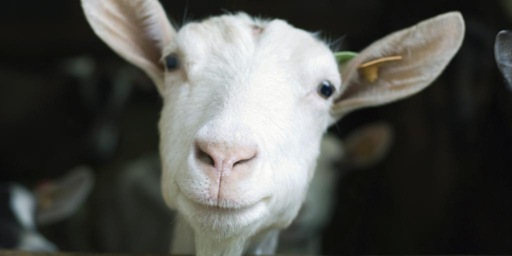 Как сплести реалистичную козу из бисера?