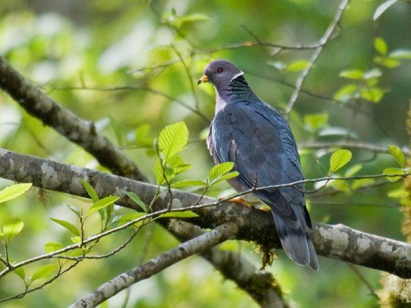 Почему голуби не сидят на деревьях?