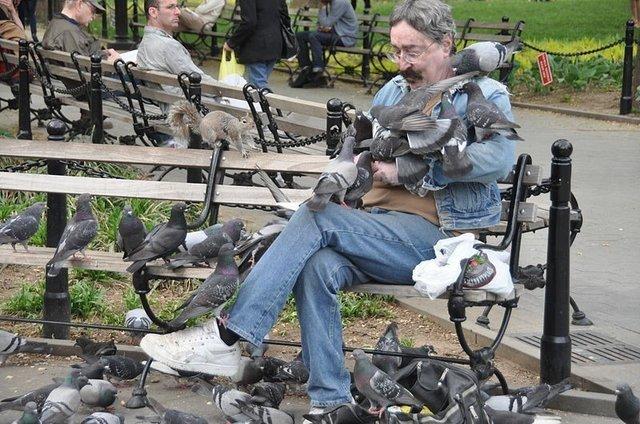 Мужчина и голуби