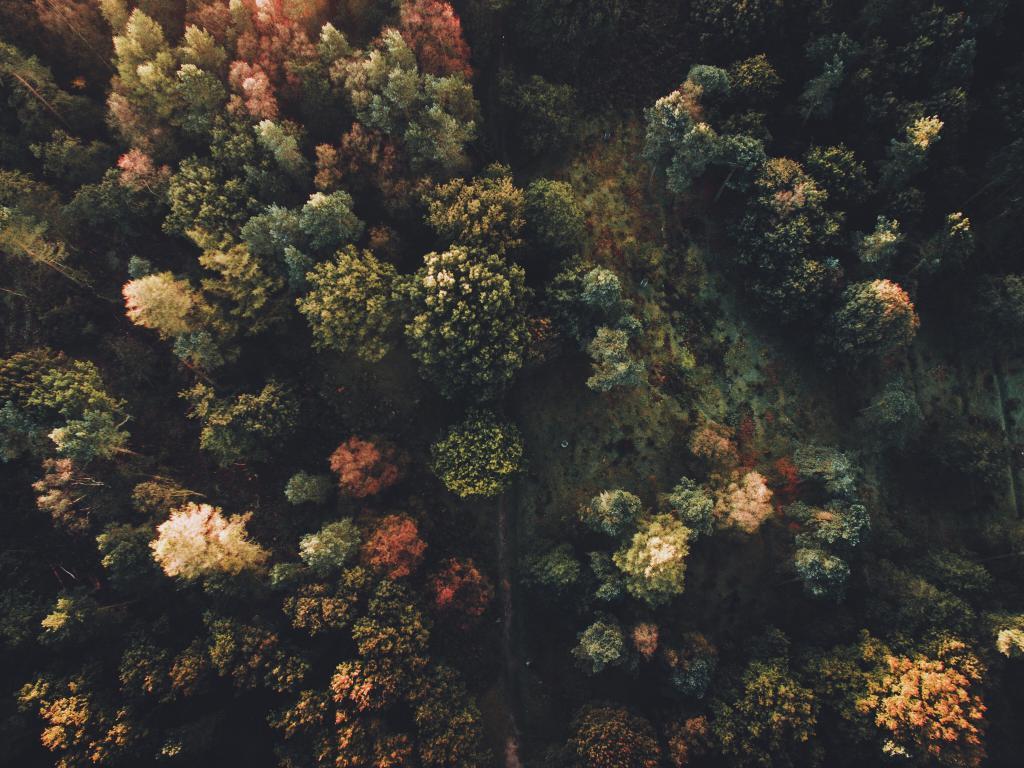 Богатство леса