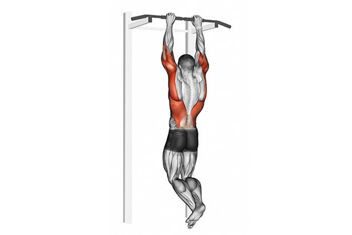 Мышцы при висе