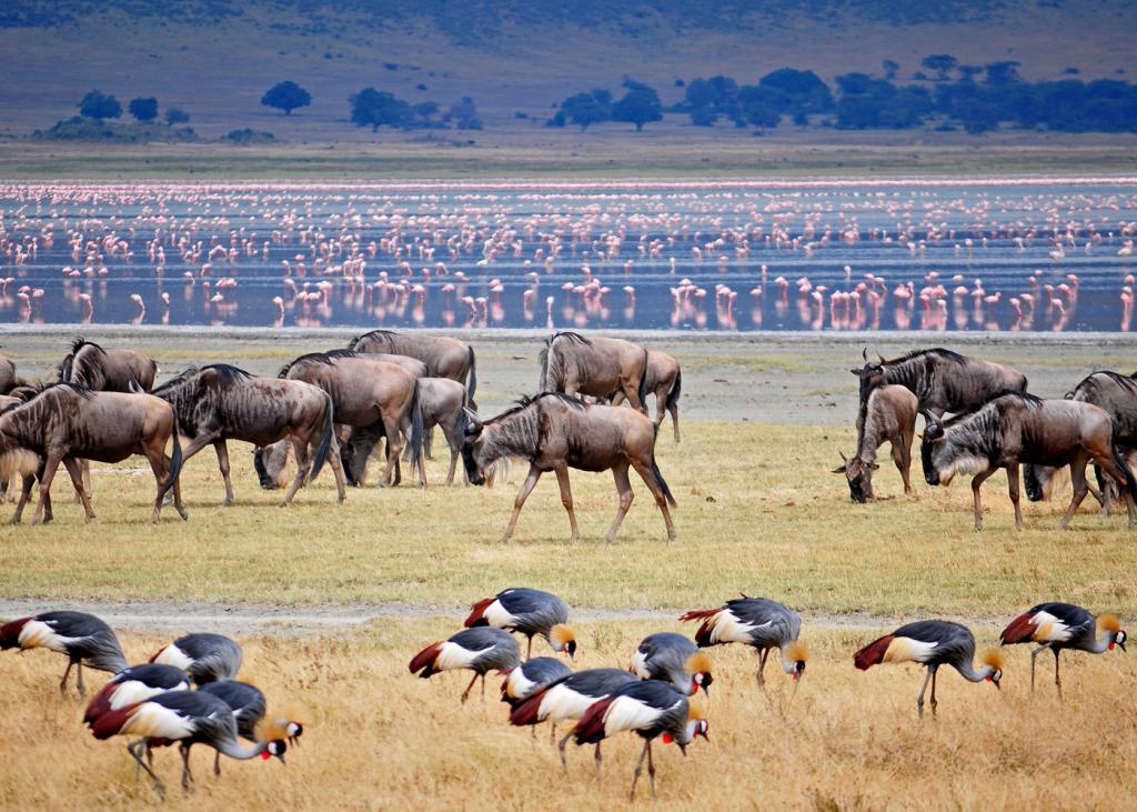 Животные на острове Занзибар
