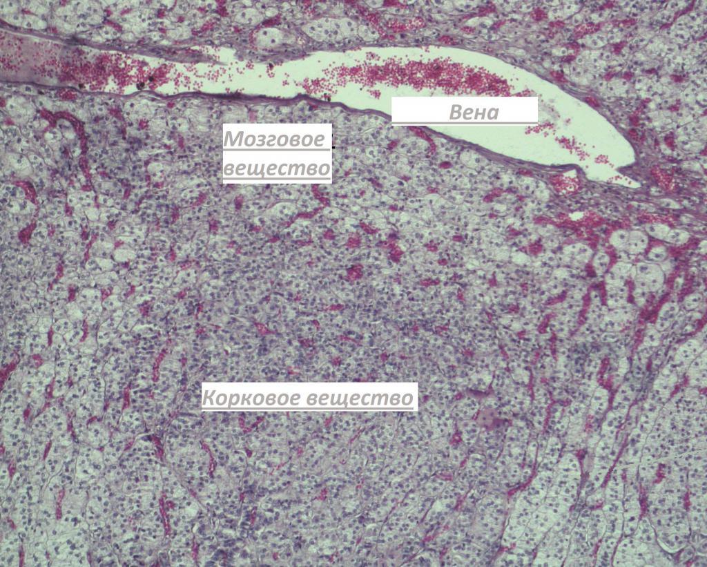 Выработка гормонов по областям