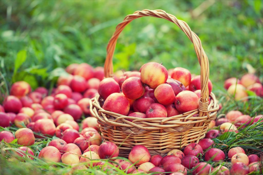 Разрешенные фрукты при панкреатите