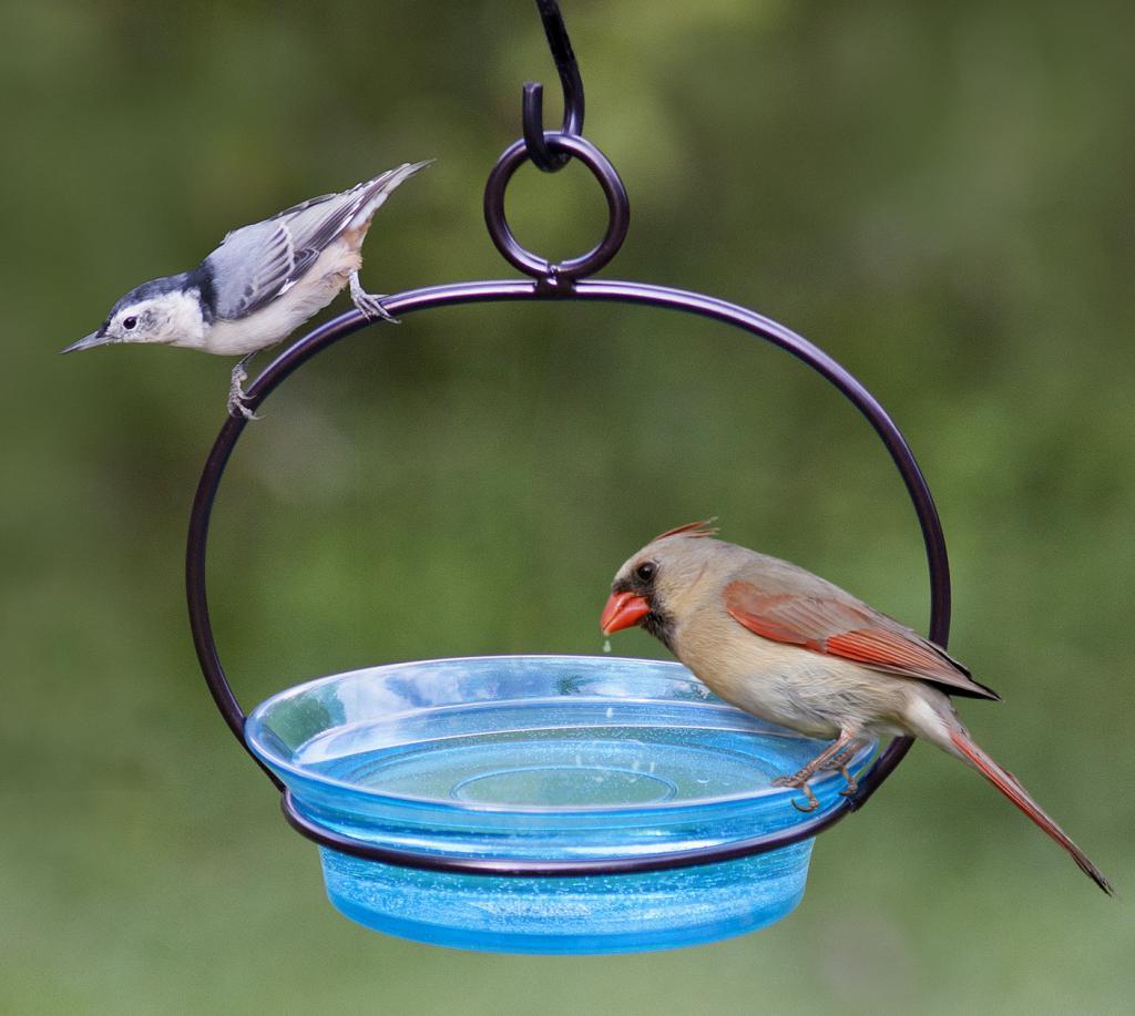 Ванночка для птицы на улице