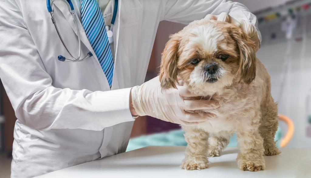 как лечить чумку у собак