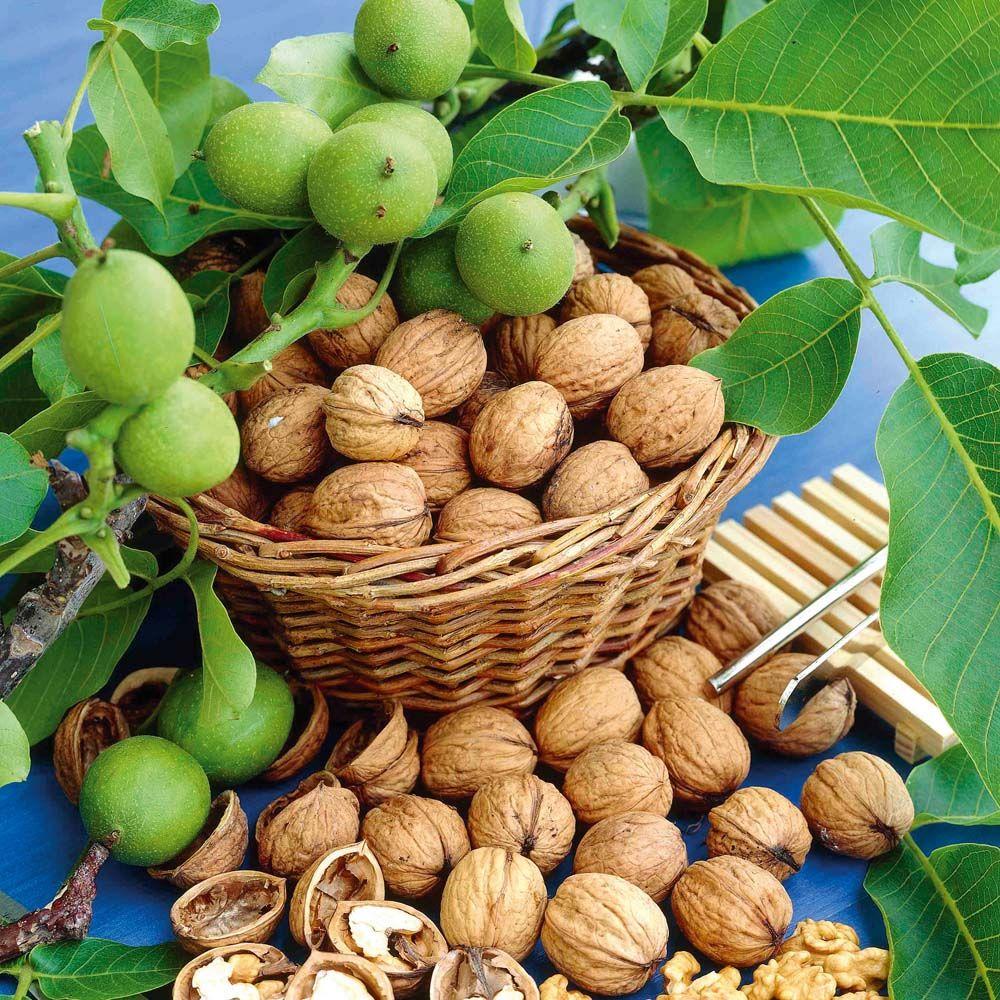 орехи и яблоки