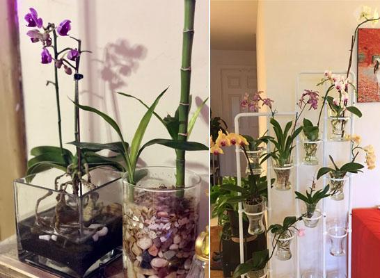 Орхидеи в воде и в субстрате