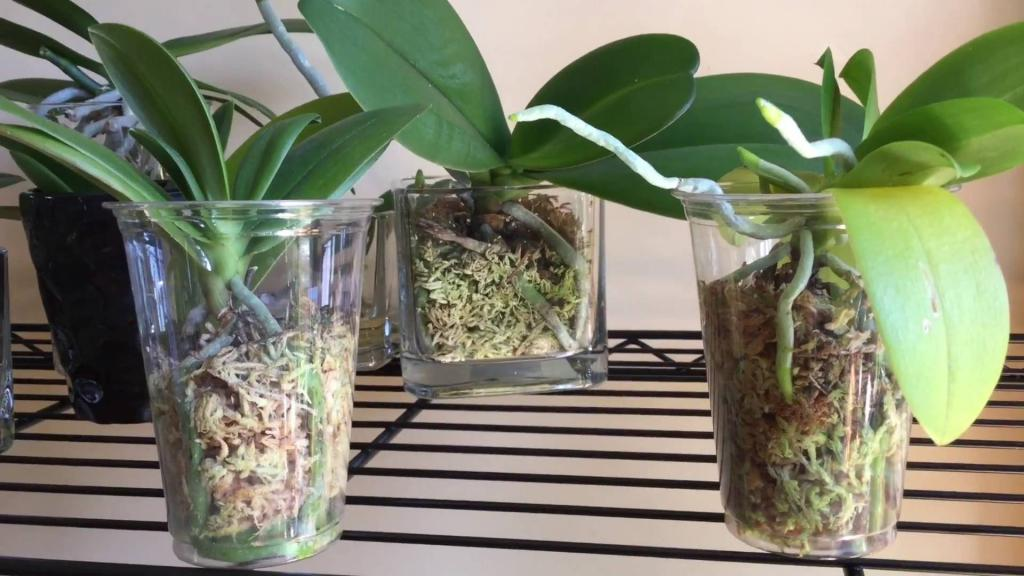 Растения с корнями в воде