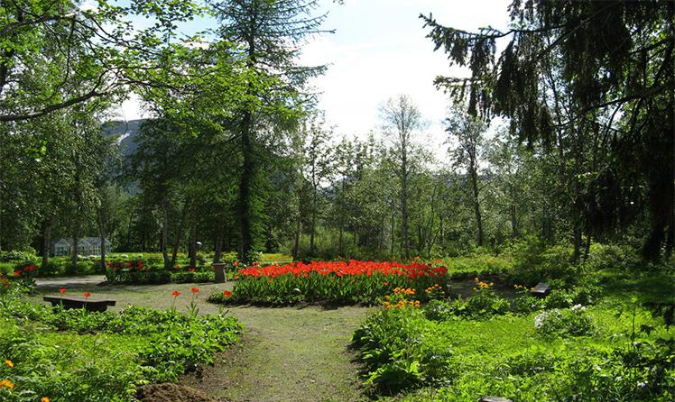 На дорожках Полярно-арктического ботанического сада