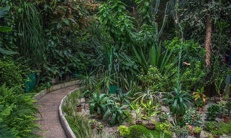 Тропические растения в оранжерее
