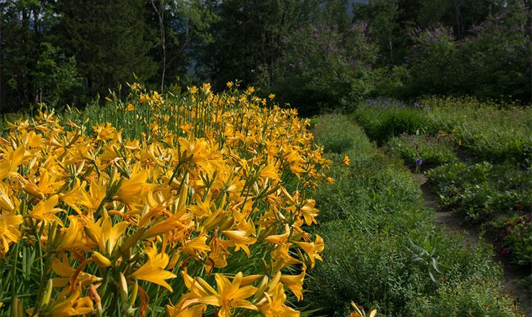 Цветущие клумбы в ботаническом саду