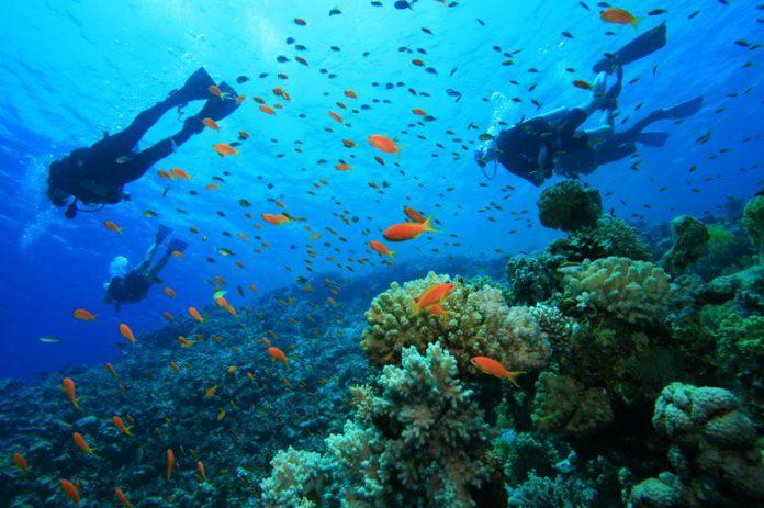 Подводное плавание на острове Хон Ман, Нячанг