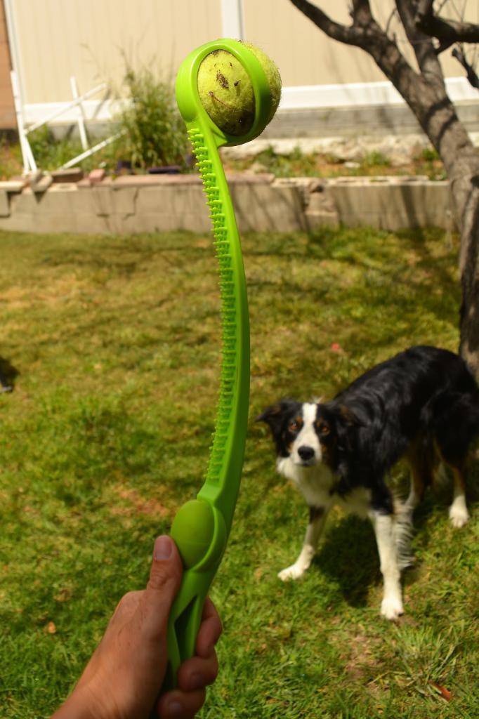 Собаку отвлекают игрой
