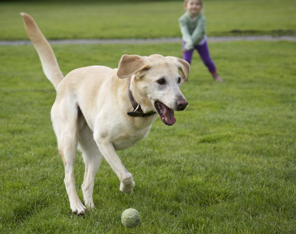 Хвост собаке не игрушка