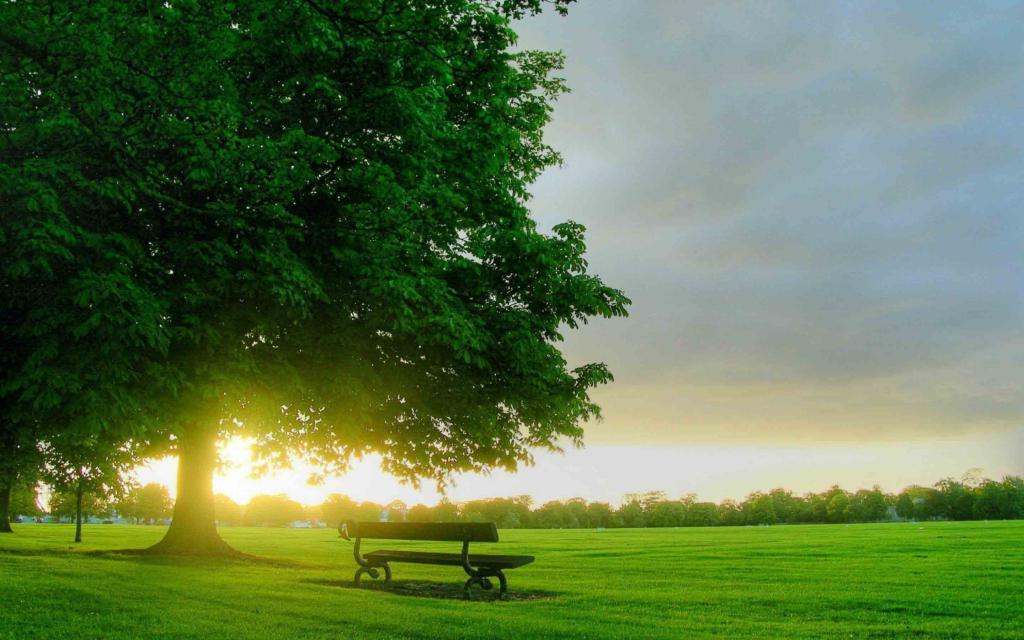 скамейка под красивым деревом