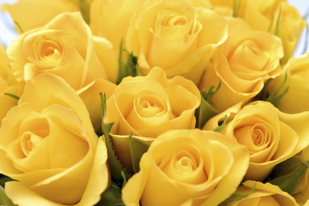 сон о розах