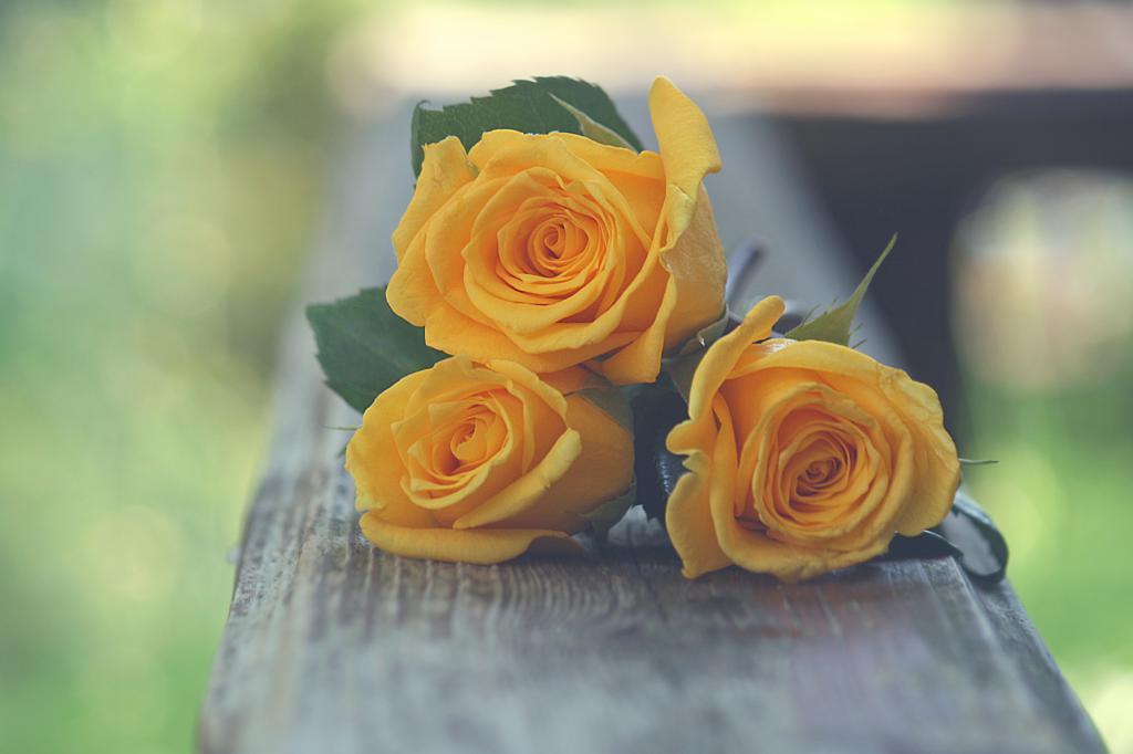 к чему снятся желтые розы дарят