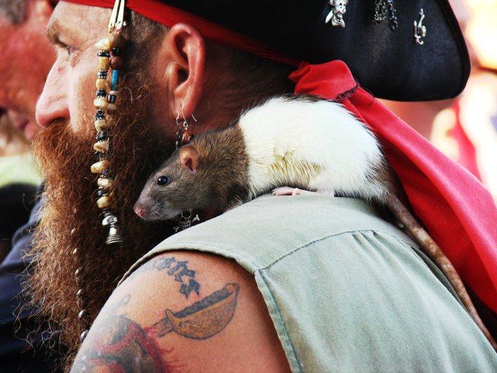 крыса на плече