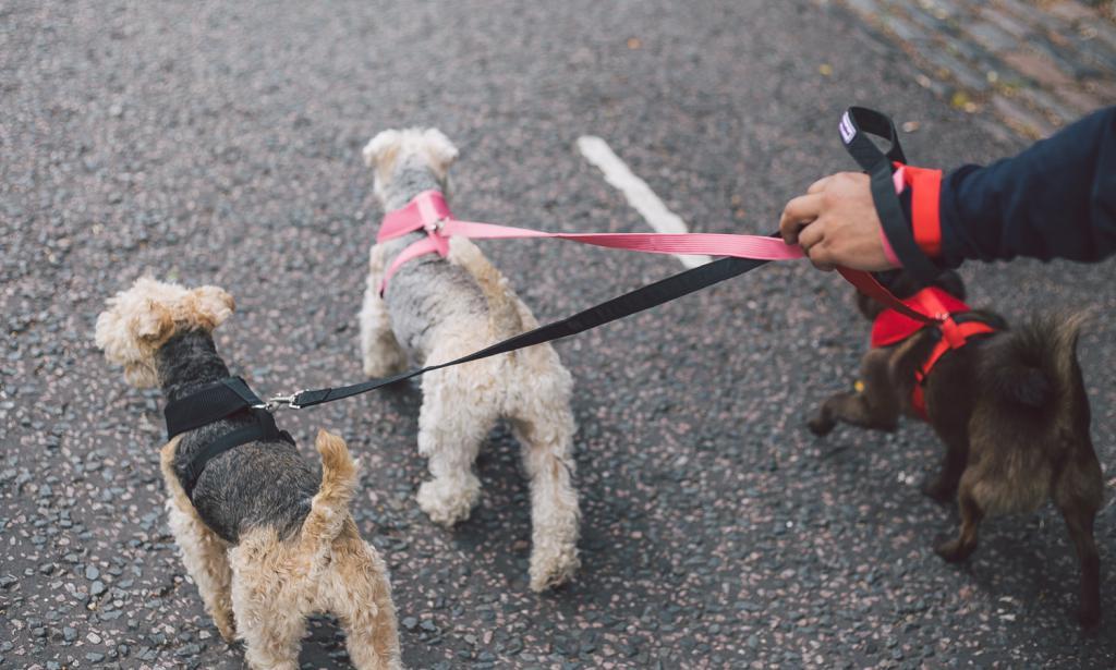 Три маленьких пса