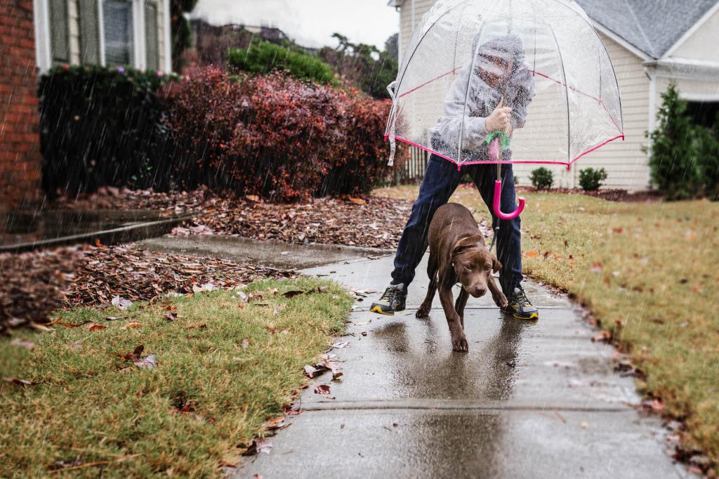 Защита собаки от дождя