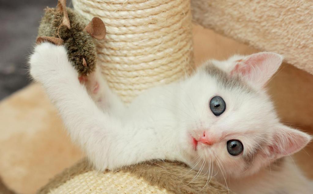 Котенок играет с мышкой