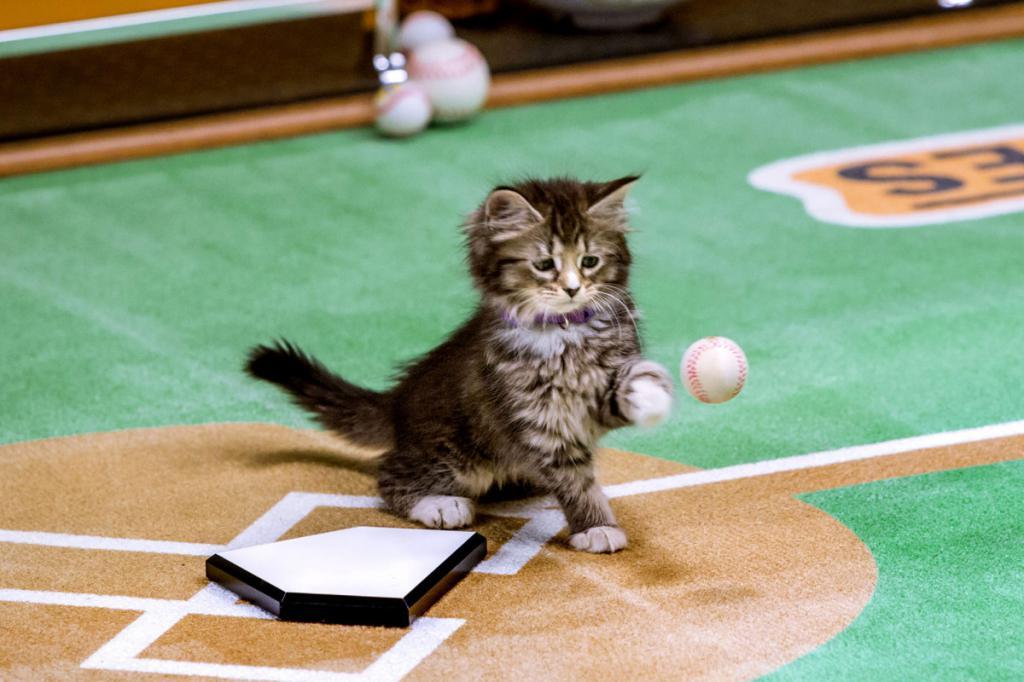 Котенок играет в мячик