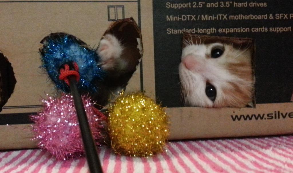 котенок играется с шариками