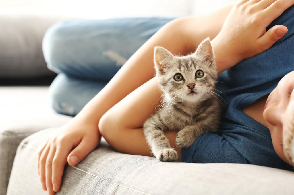 маленький котенок лежит
