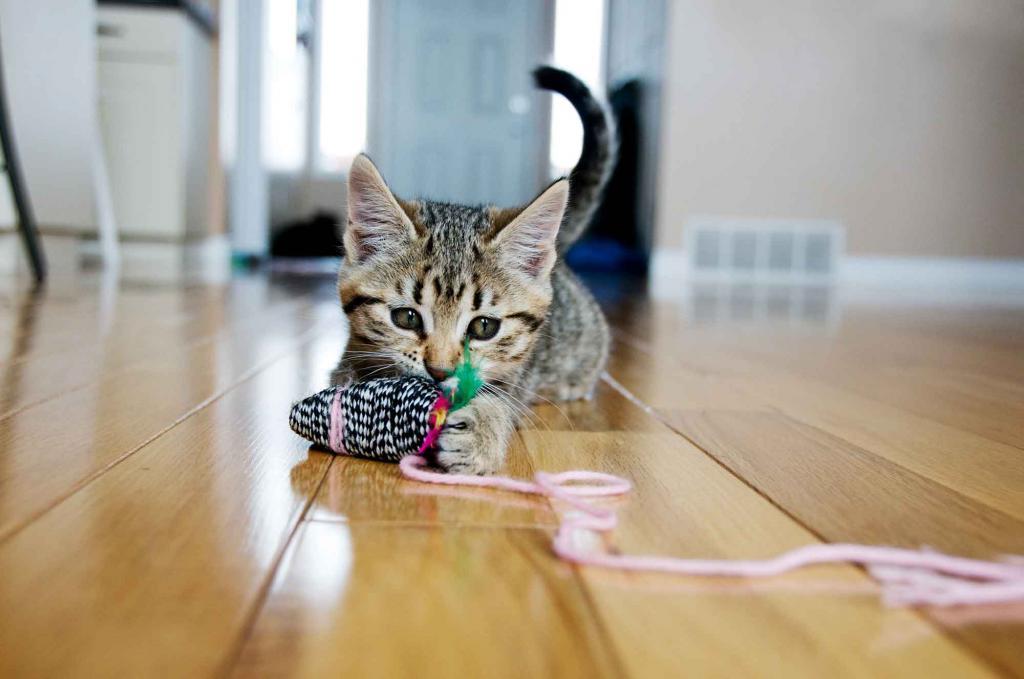милый котенок со шнурком