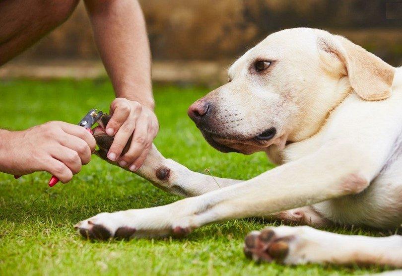 Стрижка когтей у собаки