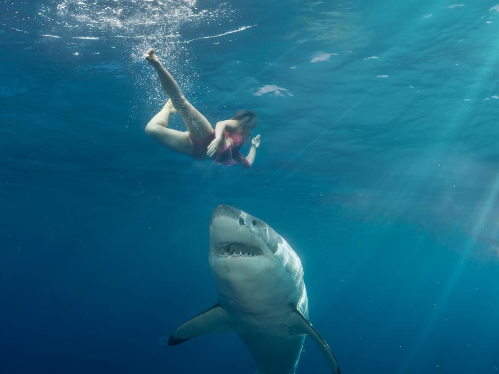 ныряльщик акула