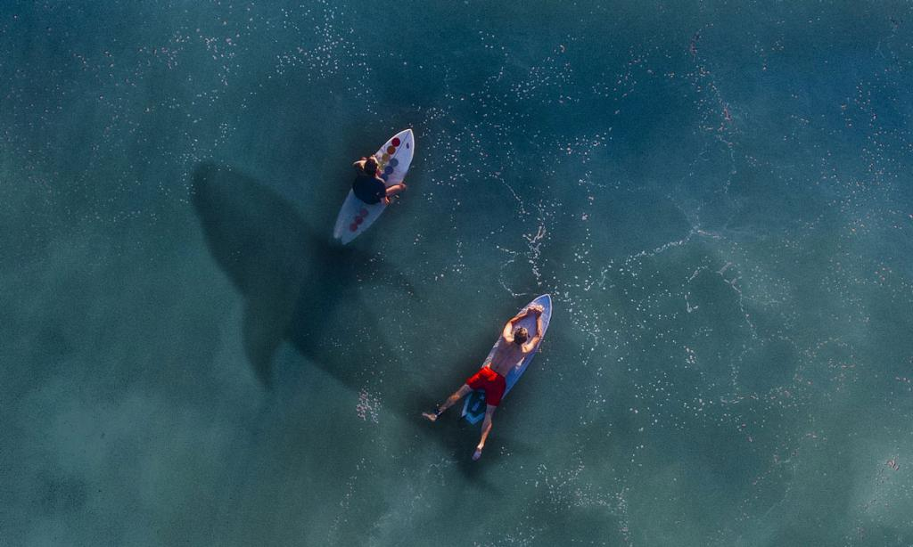 напала акула