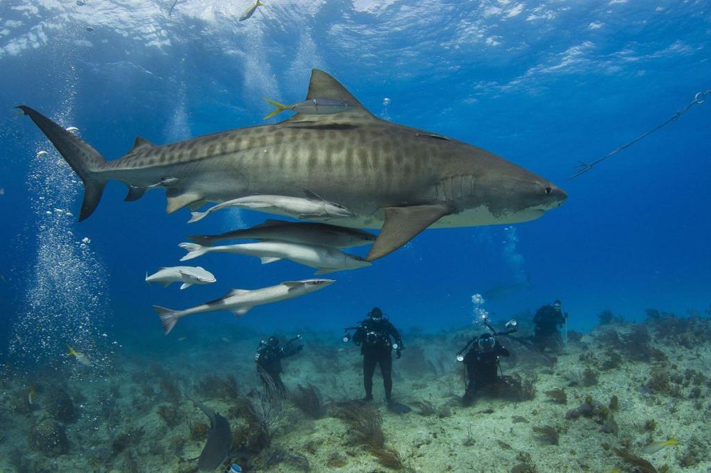 акула атака