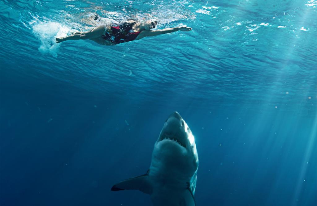 дайвинг акулы