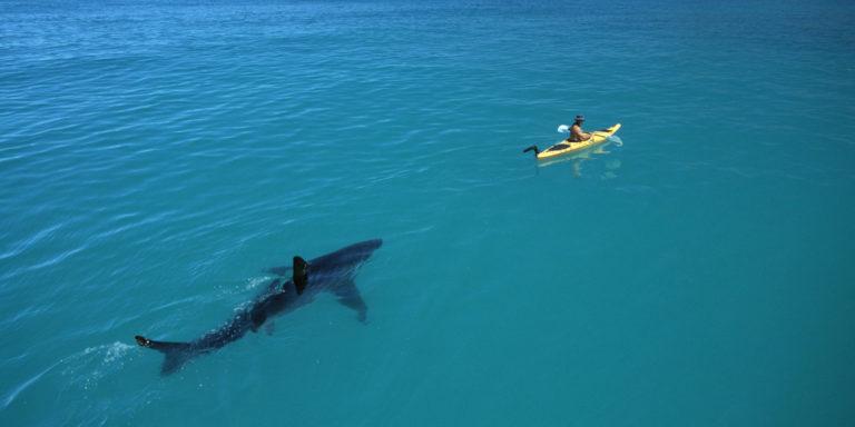 девушка спасается от акулы
