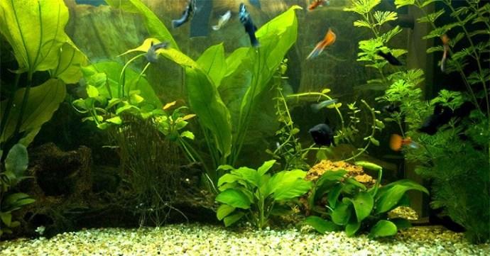 Как смягчить воду в аквариуме?