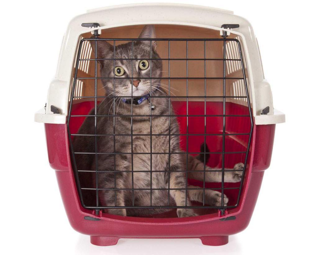 Как перевозить кота в самолете