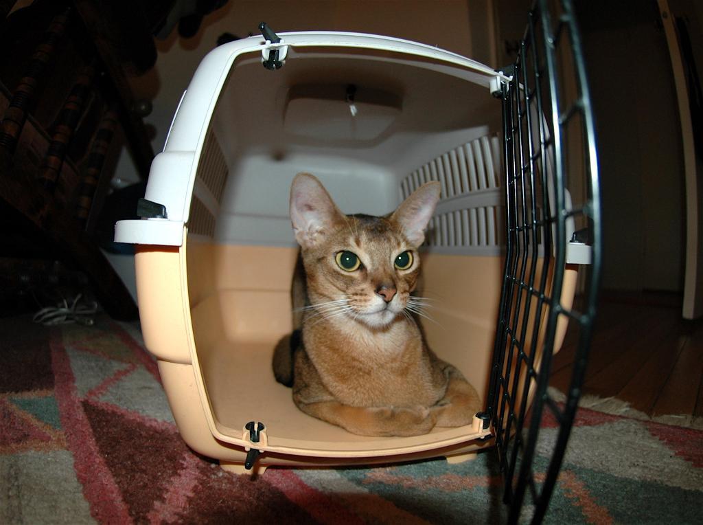 Перевозка кота в самолете