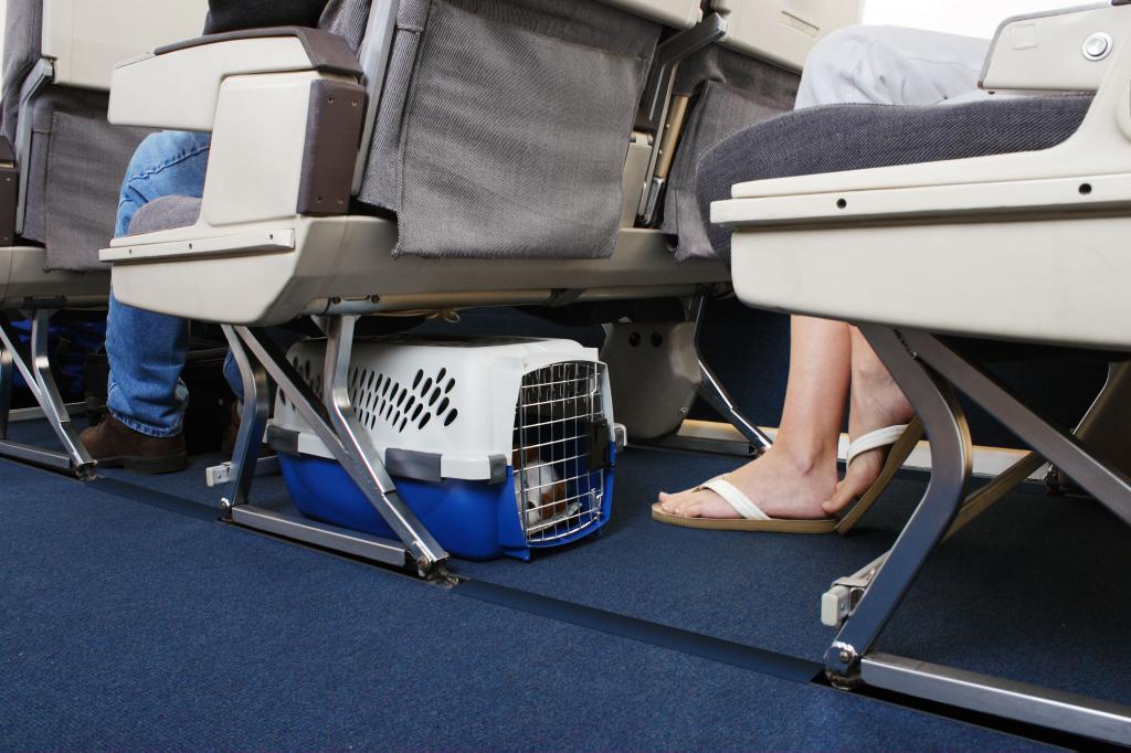 Правила перевозки кота в самолете