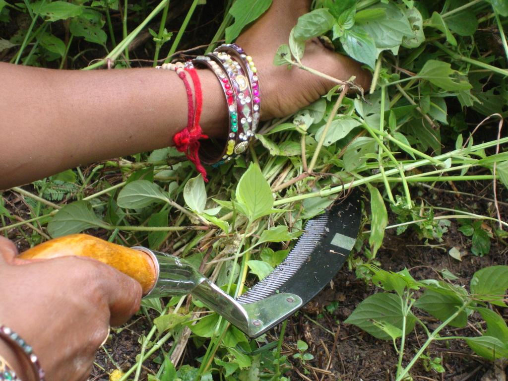 Срезание травы серпом