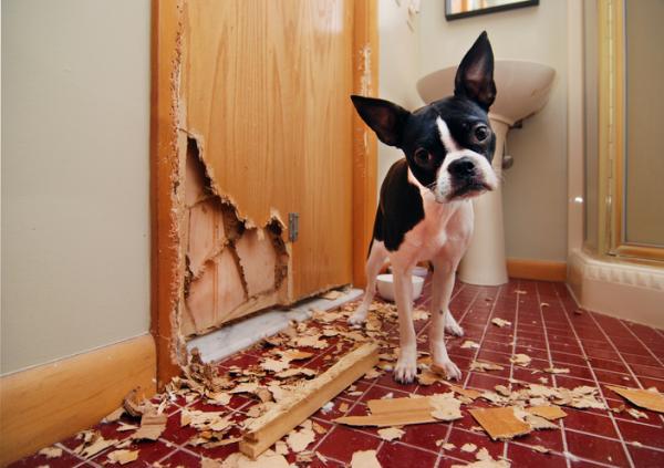 Разрушения после собаки