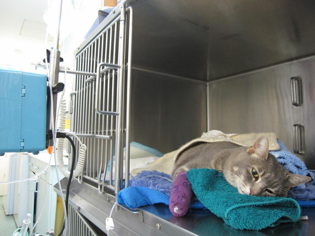 Кошка в больнице