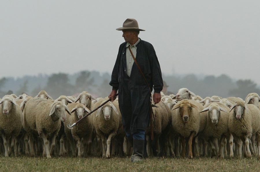 пастырь с овцами