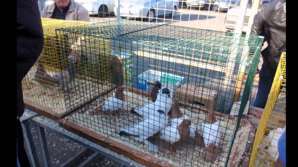 птичий рынок