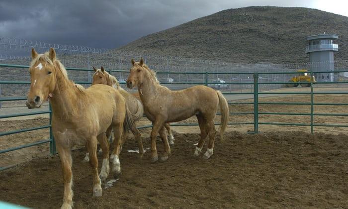 Полезна ли конина для человека?