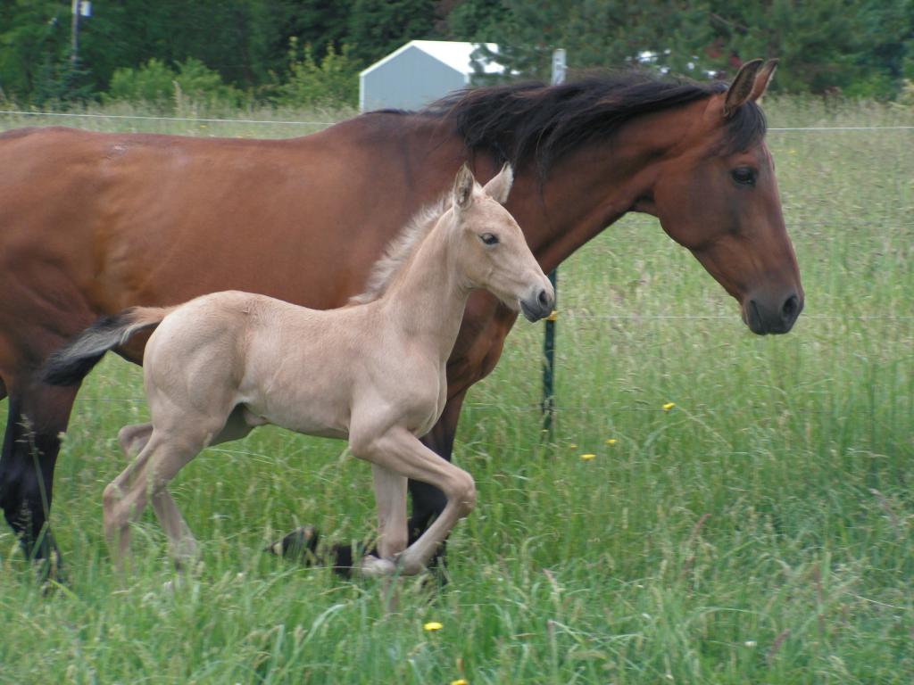 Полезна ли конина?