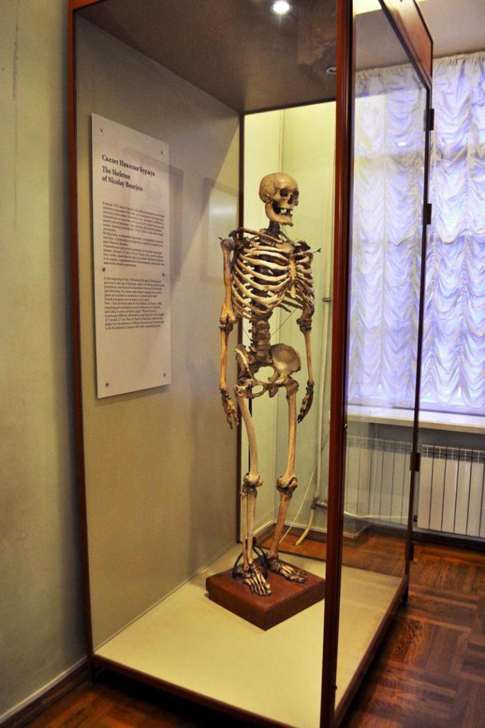 музей диковинок