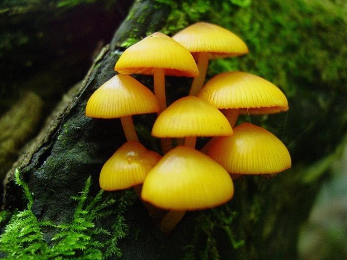 сонник видеть грибы во сне